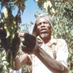 Ethiopia_coffee